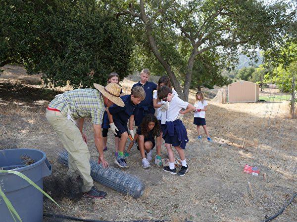 老师、学生一起为果园安装新的防护栏。(著名湾区私校Hillbrook(K-8)提供)