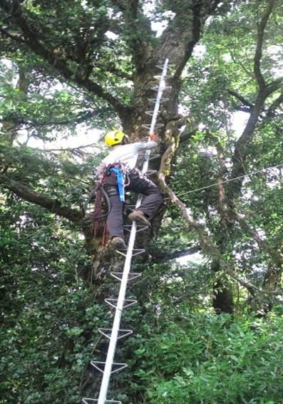 林木采种也是护管员工作项目之一。(林务局提供)