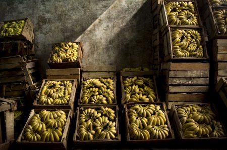 農委會主委林聰賢表示,過去鳳梨也有生產過剩問題,後來借著加工成鳳梨酥解決問題,香蕉應該可以朝這方向努力。