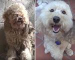 小狗狗获救的过程非常感人,其中的转折令人心疼又感动。(视频截图/大纪元合成)