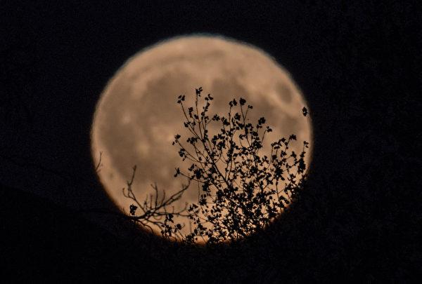 十五的月亮十六圆。 10月5日是农历八月十六,这一天的晚上,一轮满月高挂夜空。在英语世界,也有Harvest Moon,就是秋分前后满月的说法,今年的Harvest Moon也正好出现在农历八月十六。 (Matt Cardy/Getty Images)