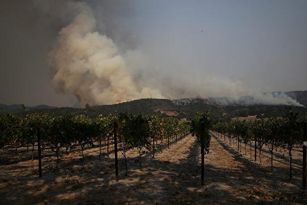 CalFire機構的發言人丹‧伯蘭特(Dan Berlant)表示,絕大多數釀酒廠和葡萄園受到這些火災影響。(Justin Sullivan/Getty Images)