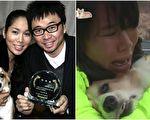 """10年来,柯基犬多多都是因车祸下肢瘫痪的""""酷龙""""姜元来和妻子的情感寄托和快乐源泉。当它罹血癌离开,一直没有子嗣的夫妇为之心碎。(视频截图/大纪元合成)"""