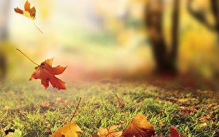 秋季阳气渐收,是人体出现阳消阴长的过渡时期,因此秋天养生,凡精神情志、饮食起居皆以养收为原则。 (Fotolia)