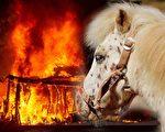加州大火,一位马匹的主人在邻居的帮助下,用胡萝卜引诱小马钻进汽车获救。(Josh Edelson/AFP/Getty Images, Pixabay/大纪元合成)