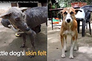 人們從路邊救了一隻看起來像石頭的流浪狗,2個月後牠變成一隻小可愛。(視頻截圖/大紀元合成)