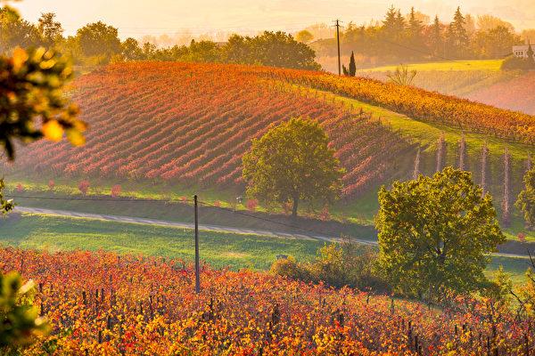 美麗富饒的艾蜜莉亞-羅馬涅地區的日落。(Shutterstock)