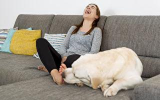 狗狗喜歡舔人的腳,至少有六種可能的原因。(shutterstock)