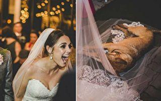 流浪狗成婚礼炸弹客 一对新人的反应引激赞