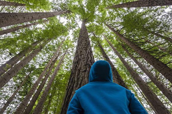 树木之间会互相沟通和交朋友。(Fotolia)