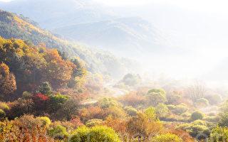 组图:韩国江原道秘密庭园 雾景彷如水彩画