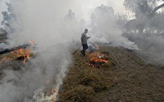 減緩空汙 印度政府租機具助農民處理稻稈