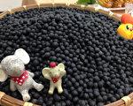 行政院農業委員會台南區農業改良場育成青仁黑豆新品種「台南11號」,不易感染白粉病,豐產且保健成分更高,適合農民有機栽培。(台南區農改場提供)