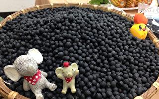 台新品種黑豆豐產抗病  水稻轉作新選項
