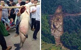 2013年,中國浙江省台州洩洪後民眾捕獲大魚卻殺之,隨後出現驚人巧合。(微博圖片/大紀元合成)