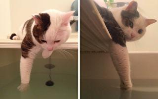 这只小猫超贴心,每天都帮主人试水温。(twitter:@ms_burube/大纪元合成)