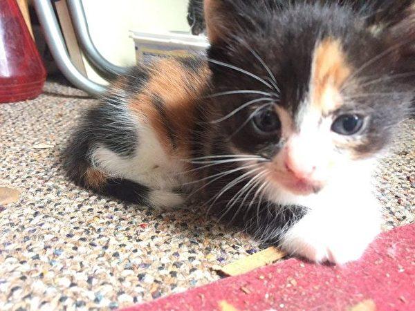 刚出生的小猫咪。(Courtesy of Sylvia)