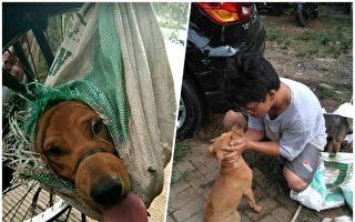 狗狗被捕装袋将送狗肉店 路人超有爱 拿钱赎回