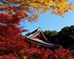日本关东千叶县本土寺 赏红叶美景