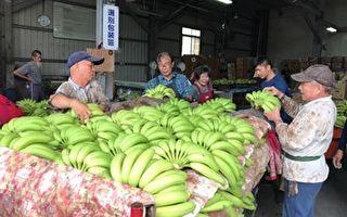 中油公司采购3万公斤香蕉,于全台100家直营中油加油站销售。(中油公司提供)