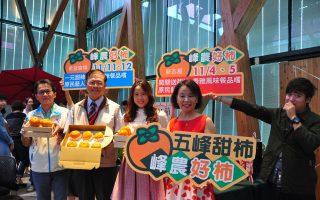 五峰甜柿甜脆多汁 新瓦屋与希望广场周末展售