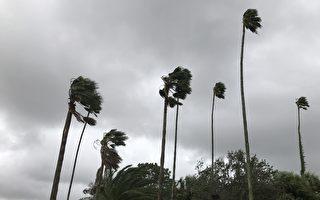 颶風過後隨風搖動的棕櫚樹( 周子定/大紀元)