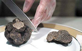 英國首次成功培植稀有黑松露