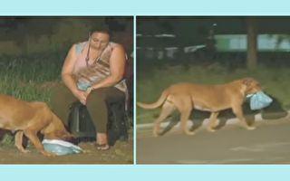 """德索萨每次都帮它把食物袋捆好,方便它""""打包""""带走。她越来越好奇,终于有一天,她决定跟着狗狗,看它到底在给谁带饭。(视频截图/大纪元合成)"""