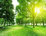 美国神经学家盖吉(Greg Gage)所进行的实验证明,植物可藉由电子讯号进行沟通,它们也会算数。图为一片树林。(Fotolia)