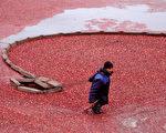 美国家庭感恩节的餐桌上,除了火鸡外,蔓越莓是最常见的配角。这个谦逊的佐料,现在却成了美中贸易的主角,越来越多的中国人成了它的忠实粉丝。(SERGEI GAPON/AFP/Getty Images)