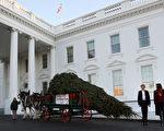一(11月20日),美国第一夫人梅拉尼娅(Melania Trump)和儿子巴伦(Barron)一起,欢迎今年的白宫圣诞树。(Mark Wilson/Getty Images)