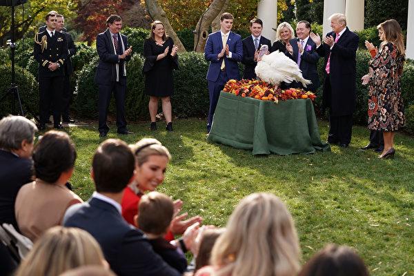 周二(11月21日),美国总统川普在白宫首次赦免火鸡,总统赦免火鸡是白宫数十年来的一项传统。( Chip Somodevilla/Getty Images)