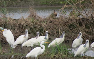 水利、水鸟与人文 冬季走读得子口湿地