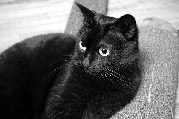 黑猫。(Pixabay)