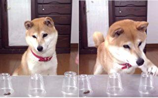 「玩猜食物在哪裡」遊戲,不料狗狗的反應太爆笑,讓網友笑翻。(視頻截圖/大紀元合成)