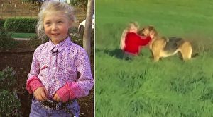 流浪大狗不让人靠近 6岁女孩展开心灵对话成功施救