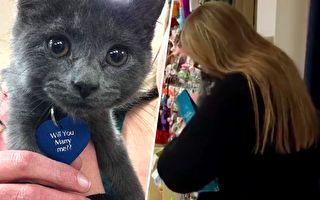 善良女子領養小貓 沒想到貓咪名牌上寫著一個驚喜