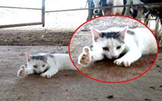 主人說拍照 貓咪竟對鏡頭大比讚 往後一看網友全笑翻