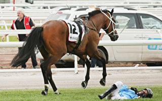 香港骑师Joao Moreira与其马匹Regal Monarch在比赛中发生事故。(Michael Dodge/Getty Images)