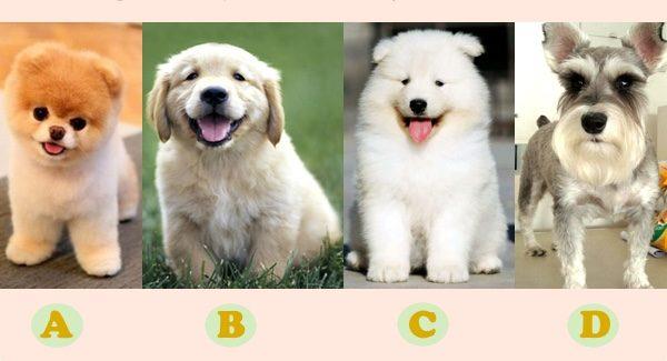 哪一隻狗狗是你喜歡的類型呢?(大紀元製圖)