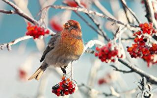 """""""小雪""""是入冬的第二个节气,此时太阳到达黄经240度,气温开始下降,此一时节的养生重点是""""养肾气,温暖情绪。""""(Shutterstock)"""