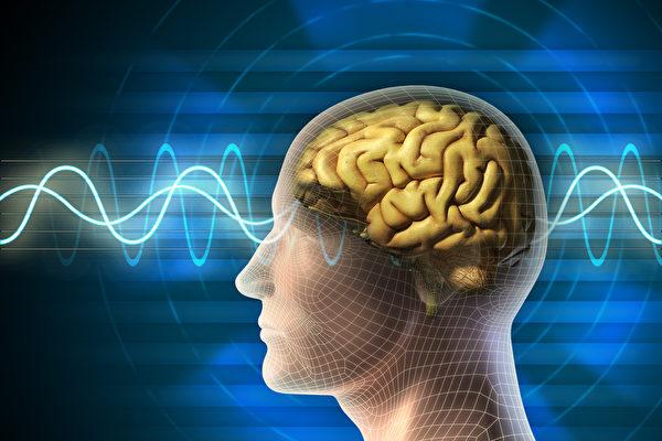 神经元能够产生电力。(Shutterstock)