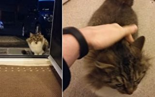 冬夜流浪貓求進屋 他打開房門 沒想到進來的不是一個