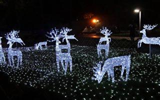 在南国遇见北国圣诞 屏东缤纷灯饰迎耶诞