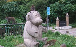 台东袐境探访-泰源幽谷赏猴