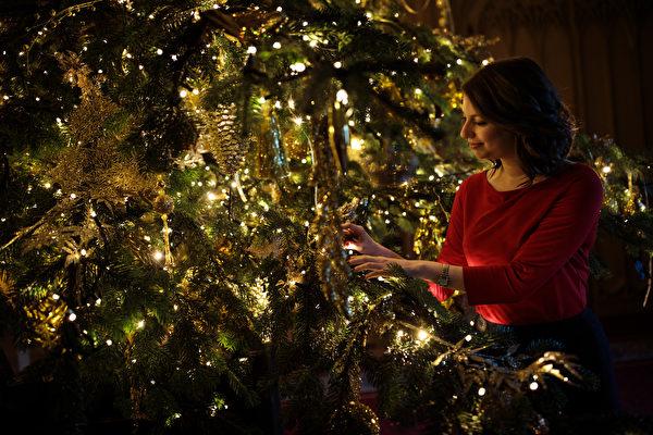 欧洲圣诞树从哪来?格鲁吉亚小孩冒险采种