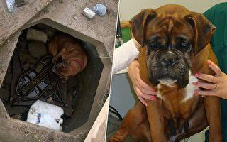 6歲女孩發現狗狗藏身洞穴 營救後得知狗狗經歷落淚