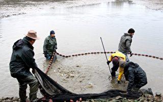 堅守百年捕魚傳統 法國東布漁民只在冬天捕魚