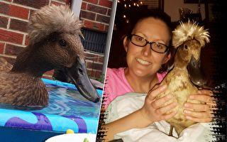 女子救了一隻鴨子 沒想到之後鴨子竟屢次救了她的命