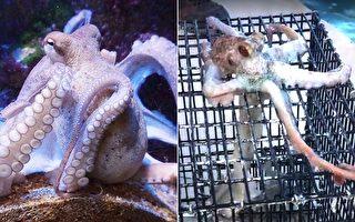 章鱼发现渔夫的笼子 爬过去干了件事 让渔民笑弯了腰